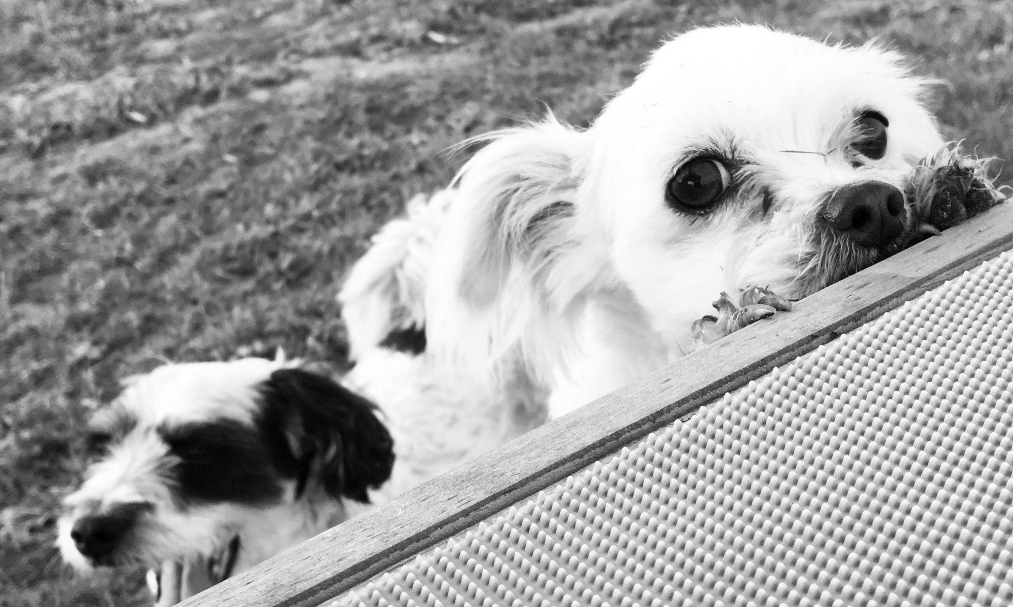 Hondenhotel Dogs-@-Home Rillaar.